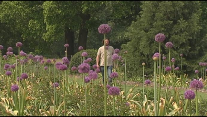 Pioenrozen staan in bloei in plantentuin Merksplas-Kolonie