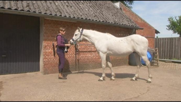 """Duffelaar gaat 24 uur paarden kappen: """"Gevaarlijk beroep"""""""