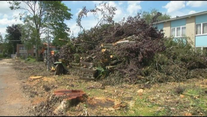 """Bomen gekapt in Schijfstraat: """"nul rekening met vogelnesten"""""""