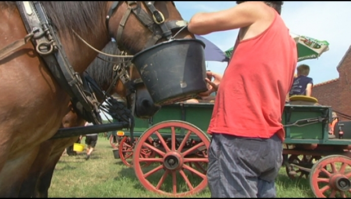 Veel commotie over paardentrektocht bij hitte