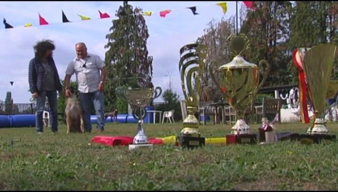 Kempense hond Rex is Belgisch kampioen
