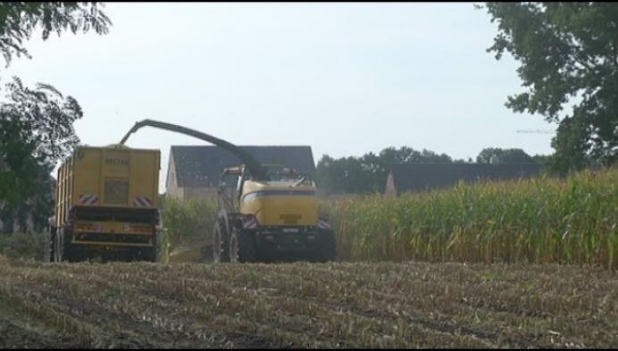 Boeren en loonwerkers blikken terug op degelijk maïsjaar