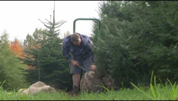 Kempenaars kopen steeds vaker 2 kerstbomen