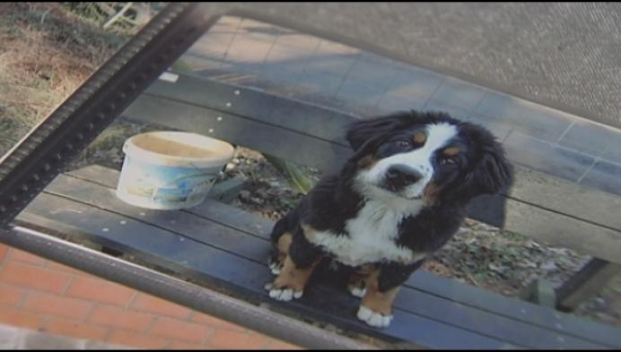 """Gezin zoekt al weken naar hond: """"Ontsnapt of gestolen?"""""""