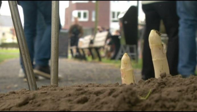 Puurs Sint-Amands reikt binnenkort 'gouden asperge' uit