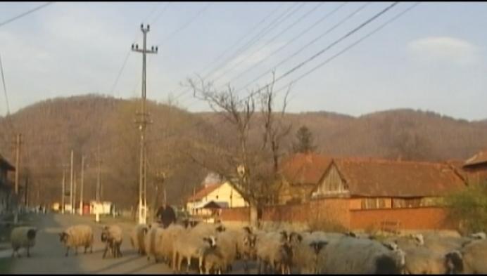 Presidentiële onderscheiding voor Actie Dorpen Roemenië