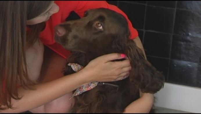 Lucky Lou verkoopt 'kamelenslokdarm' ... voor honden