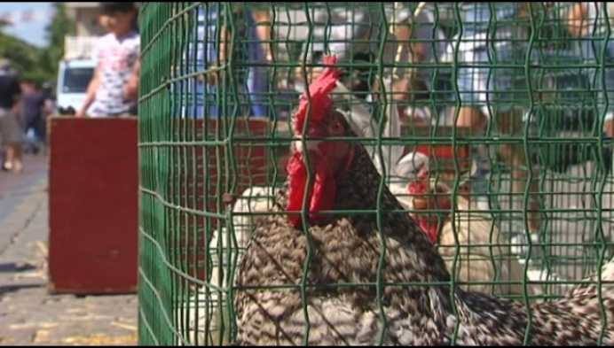 Strengere coronaregels op Molse dierenmarkt