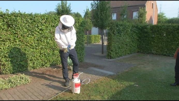 Brandweer Kempen moet zo'n 400 wespennesten vernietigen