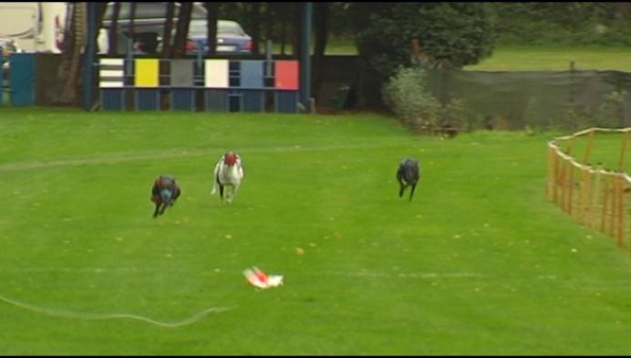 Westelse Windhonden racen op Werelddierendag