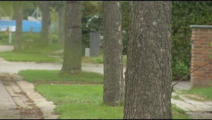 Gemeentebestuur Lier wil bomen kappen in straten Koningshooikt