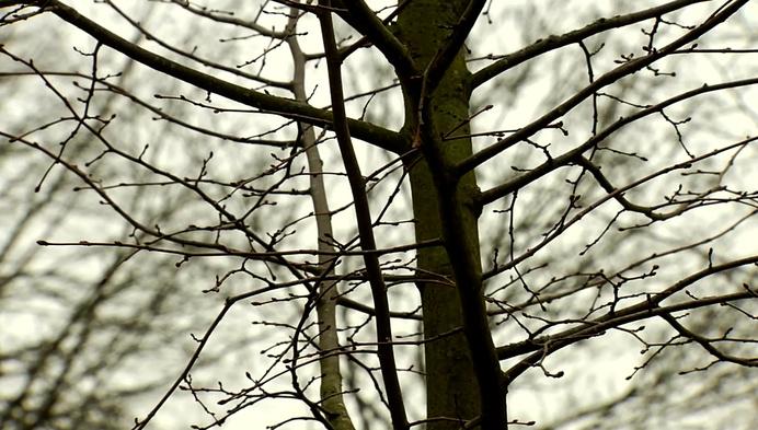 Natuurboom schenkt symbolisch een winterlinde aan de stad Lier