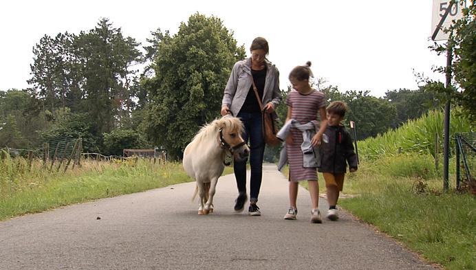 Uitstapje voor de zomer: ponywandelen in Kasterlee