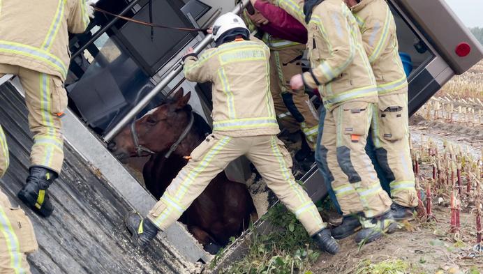 Paardentrailer belandt in gracht: paarden ongedeerd